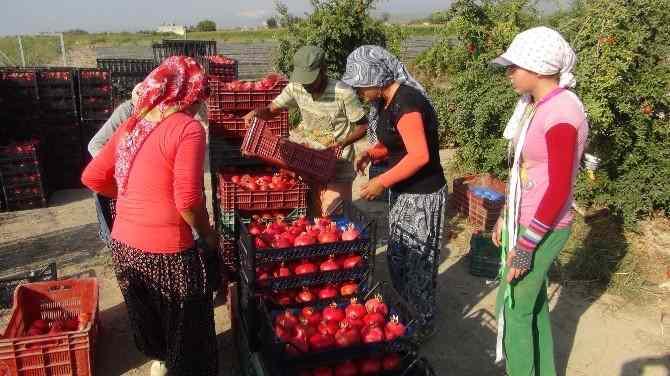 Кабмин РФ опубликовал список разрешенных турецких фруктов