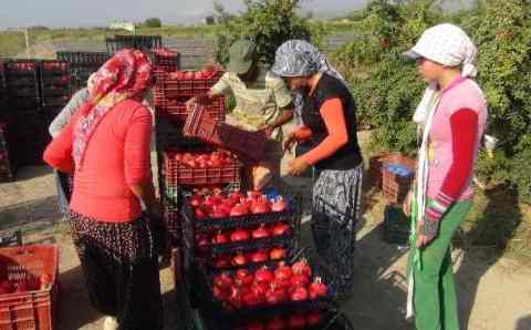 Беларусь заменила турецким фермерам Россию
