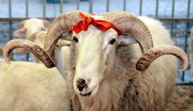 Турция отмечает праздник Курбан-байрам