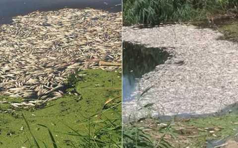 Эксперты ищут причину массовой гибели рыбы в Айдыне