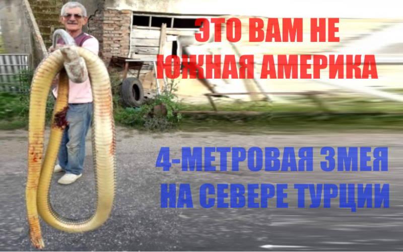 Мужчина спас внуков от 4-метровой змеи