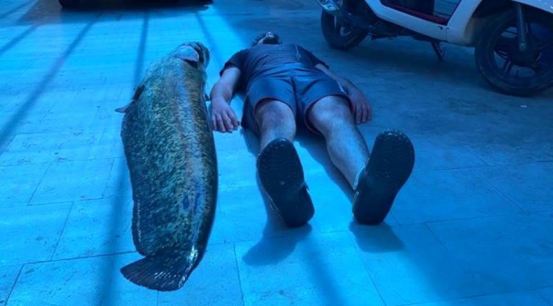 Рыбак получил 21 000 лир за 6 огромных сомов