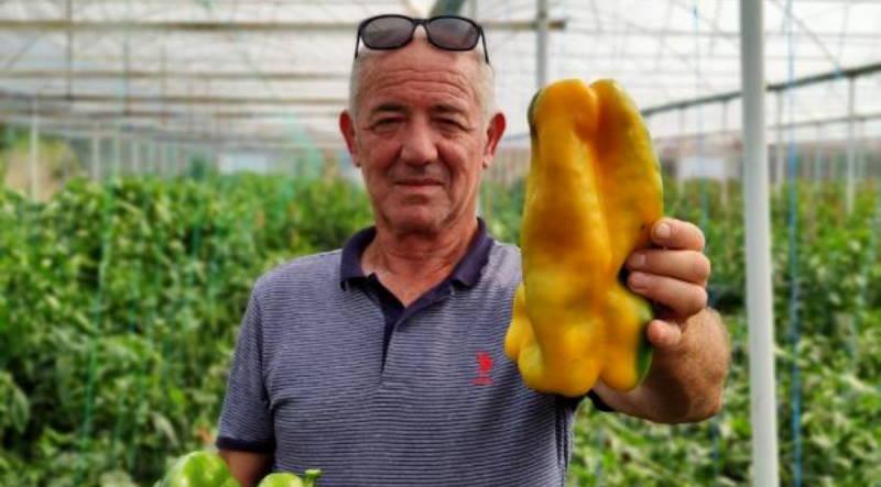 Фермер из Бурсы вырастил перец весом 1 кг