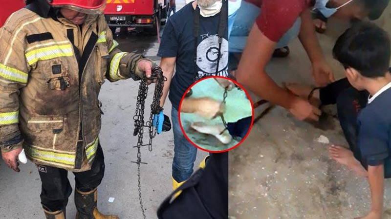 Пожарный спас из огня прикованного цепью ребенка