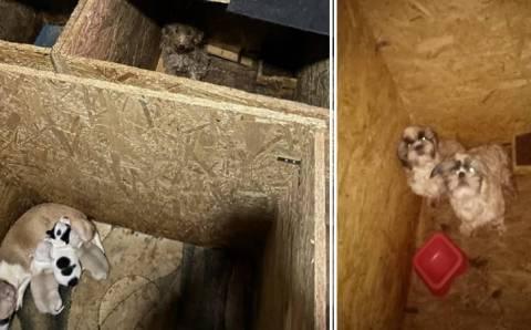 68 породистых собак ютились в одном из подвалов Анкары