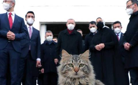 Эрдоган, Телеграм и Котик