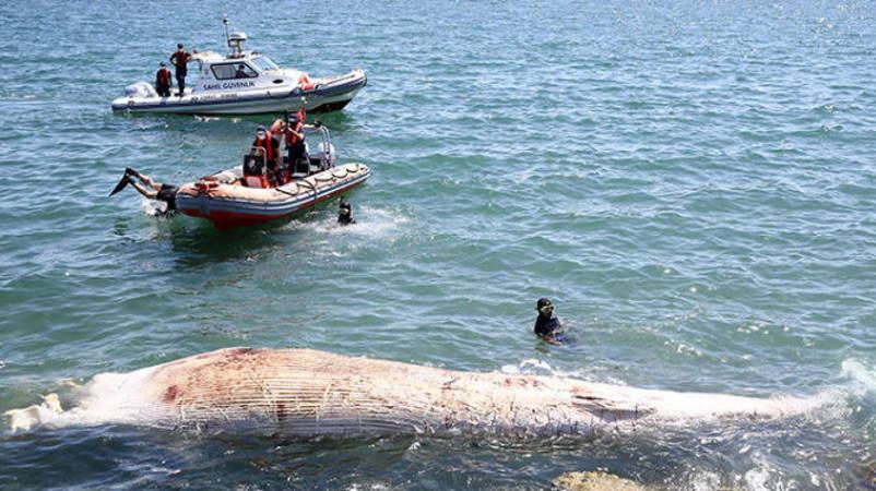 Мёртвого кита прибило к побережью Мерсина