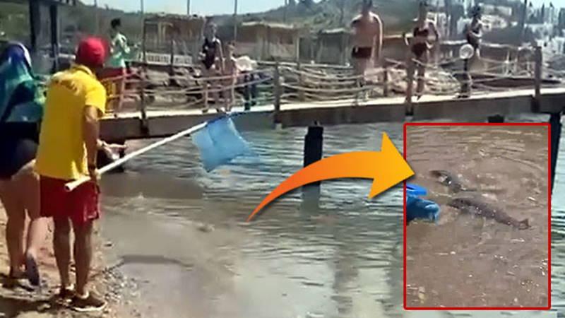 Туристов в Аланье напугала стая ядовитых рыб