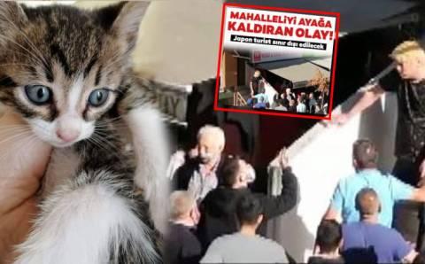 Жители Стамбула едва не линчевали японца за поедание котят