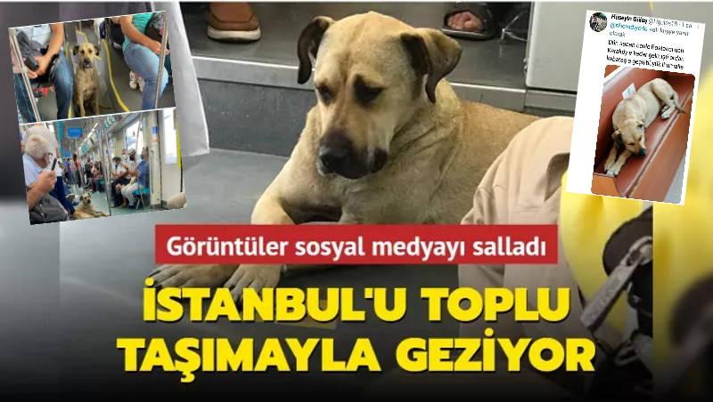 Путешествующий пес покорил сердца стамбульцев