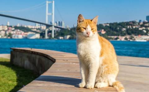 Турция наслаждается «бархатным сезоном»