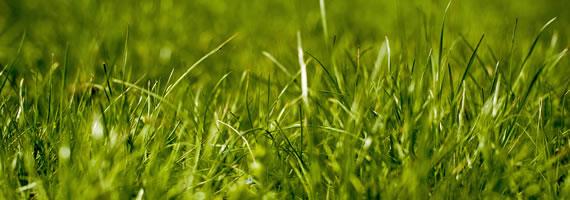 grass-shoots
