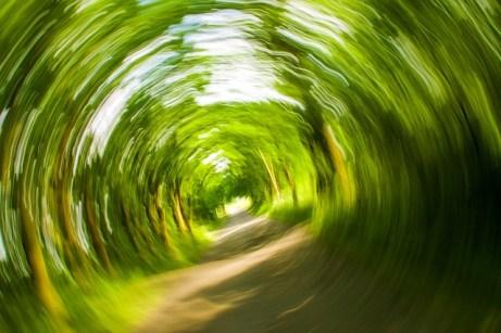 trees-358418_640