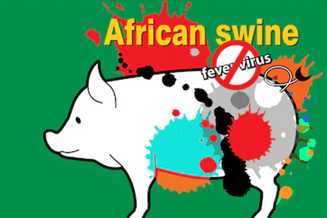 Strict Prevention Of African Swine Flu