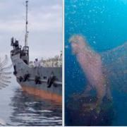 Nusa Dua newest underwater tourist attraction