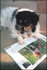 Sparky dog, Science