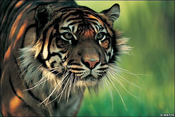 Binatang Langka Yang Dilindungi Di Indonesia