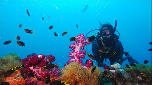 Diver on the Great Barrier Reef