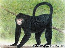 An artists' illustration of the Burmese snub-nosed monkey (c) Martin Aveling / FFI