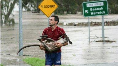 Man carrying a kangaroo, Ipswich, Australia (12 January 2011)
