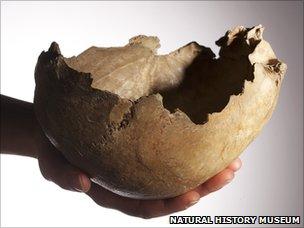Skull bowl (Natural History Museum)