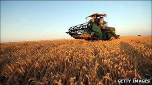 A Tunisian farmer harvests wheat