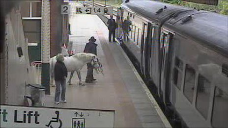 A man leading a horse on to the platform at Wrexham General train station
