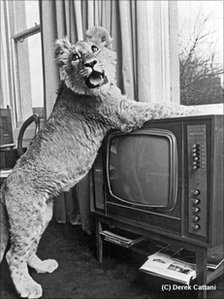 Christian puts his paws on the television (Copyright Derek Cattani)