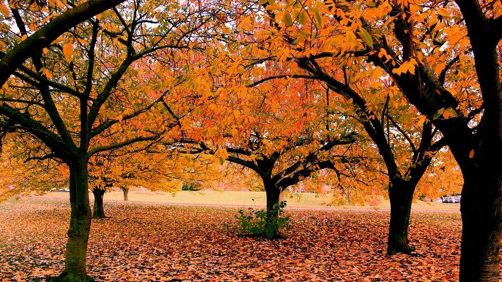 Image result for daun-daun berguguran di bumi