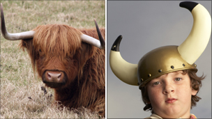 Highland cow and boy in Viking helmet