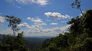 Amazon skyline