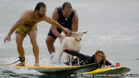 Dana McGregor, far left, surfs with his pet goat Pismo and friends Mark and Debbie Gale