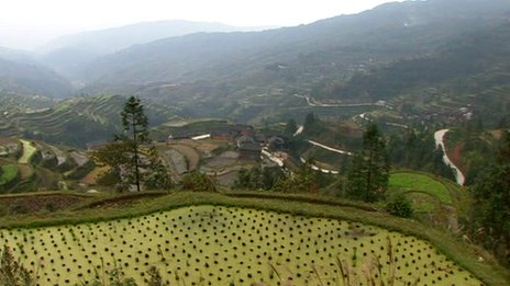 Paddy fields in Zhaoxing in China's Guizhou province