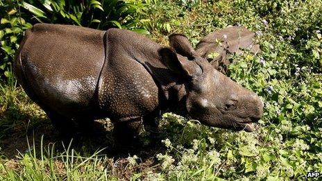Rhino in Chitwan National Park