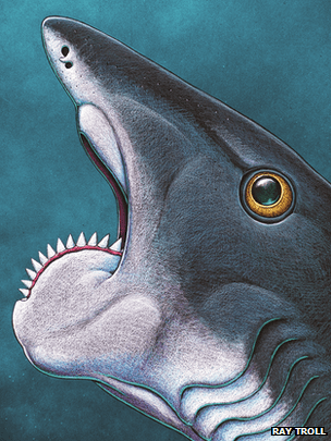 Artist's impression of ancient spiral-tooth fish Helicoprion