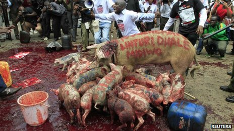 Pigs lick blood outside parliament in  Kenya (14 May 2013)
