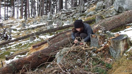 Felled tree which it is claimed white-tailed eagles had been building a nest in