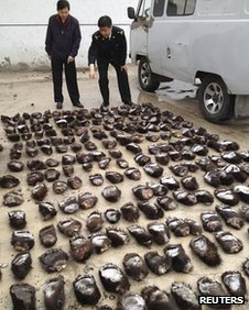 Customs officials count smuggled bear paws in Manzhouli, Inner Mongolia Autonomous Region, 15 June 2013