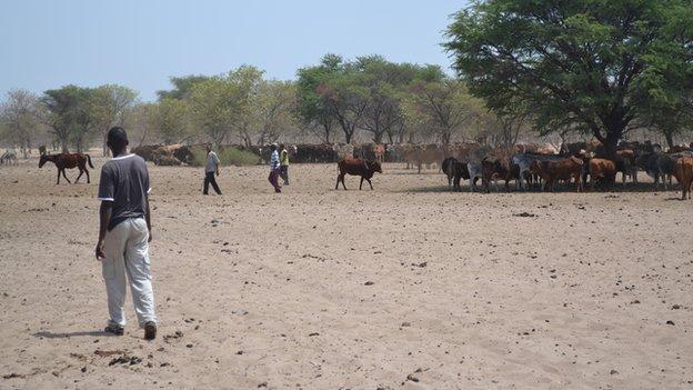 Bushmen herders in New Xade, Botswana