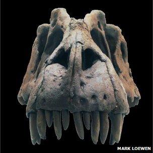 Lythronax fossil