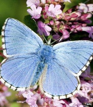 Blue butterfly (Image: Science Photo Library)