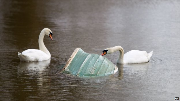 Swans with a submerged boat on the flooded banks of the River Thames in Chertsey, Surrey, on 9 February