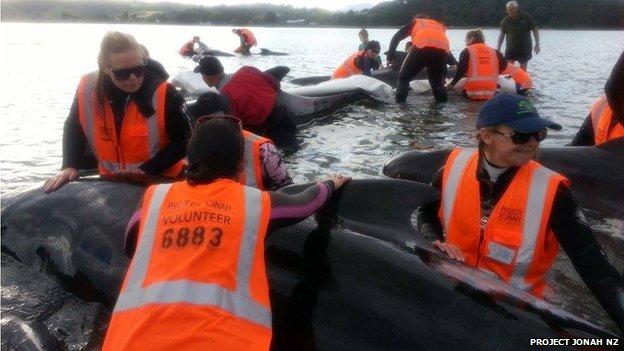 Whale rescue 05 November, 2014