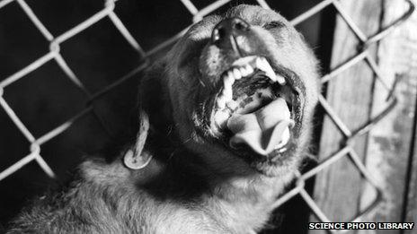 Suspected rabid dog