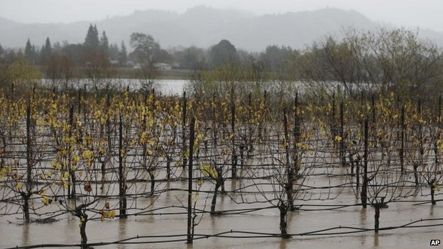 A vineyard is flooded along Highway 101 in Winsor California 11 december 2014