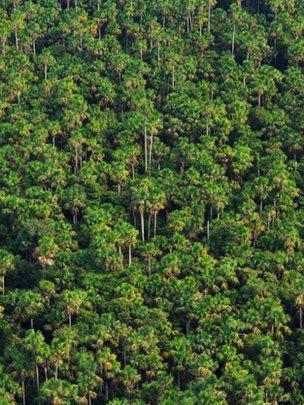 Trees in Amazonia (Image: Óscar Jarama/IIAP)