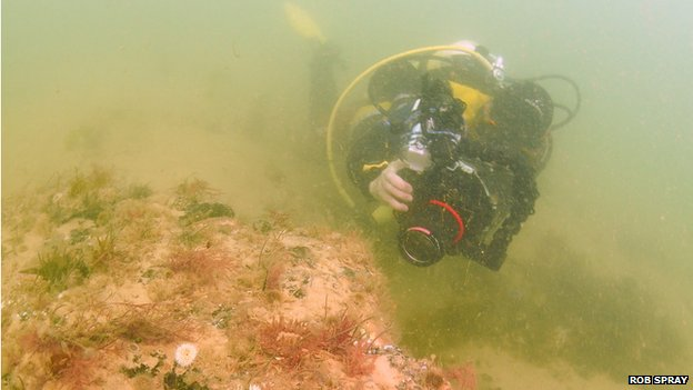 A diver explores the underwater forest
