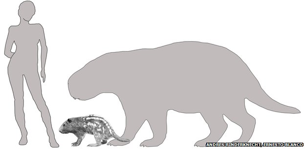 size comparison of Josephoartigasia monesi