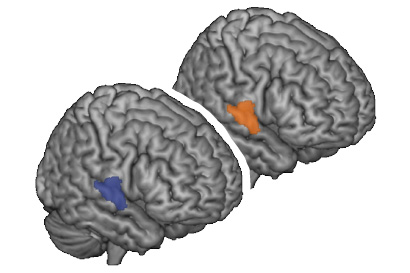 same brain area is active in communicator and interpreter during conversation