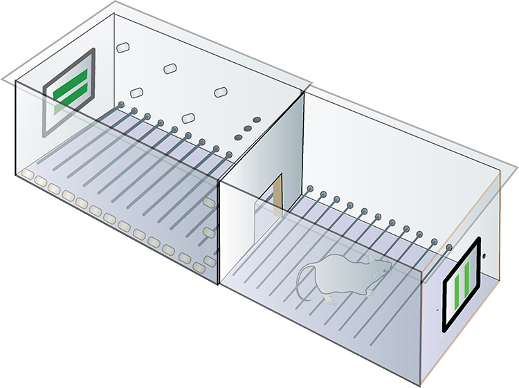 diagram of iPad learning cage